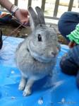 ぽおる花見2011(ウサギ)